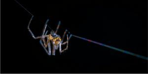 como eliminar arañas en santiago de chile