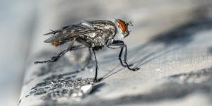 como eliminar moscas y mantenerlas alejadas