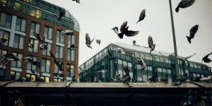 como eliminar palomas